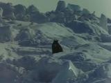 Антарктика (1983) Япония (фильм основан на реальных событиях)